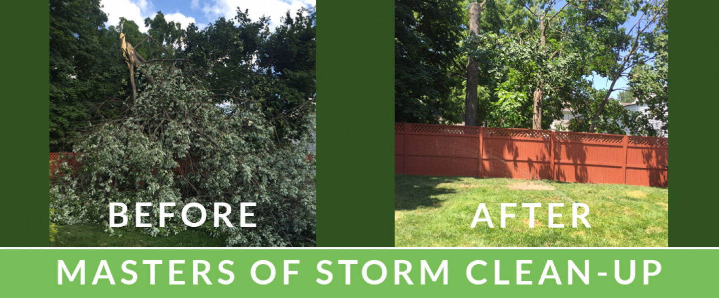 Storm Clean Up Services in Scotch Plains, NJ