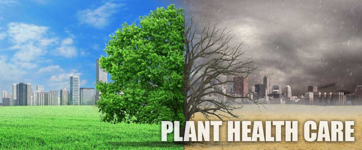 Plant Health Care in Scotch Plains, NJ