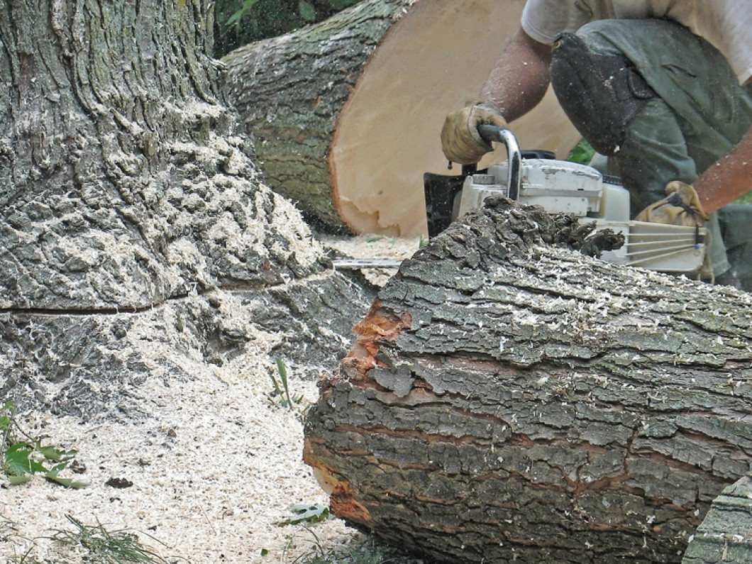Comprehensive Tree Care Servces